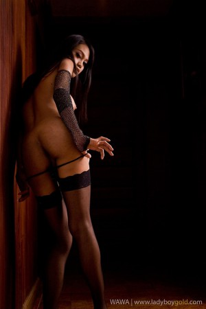 charming ladyboy girl in stockings